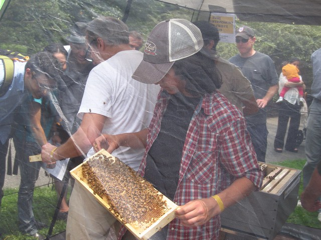 A young member of the NYC beekeeping Meetup Group shows off part of his hive. Photo by Rebecca Bullene.