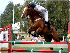 western pleasure(0.0), physical exercise(0.0), animal sports(1.0), equestrianism(1.0), english riding(1.0), modern pentathlon(1.0), eventing(1.0), mare(1.0), stallion(1.0), show jumping(1.0), hunt seat(1.0), equestrian sport(1.0), sports(1.0), recreation(1.0), animal training(1.0), outdoor recreation(1.0), equitation(1.0), cross-country equestrianism(1.0), person(1.0),