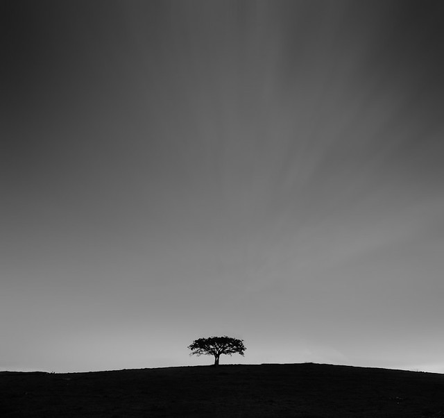 lonely | tree