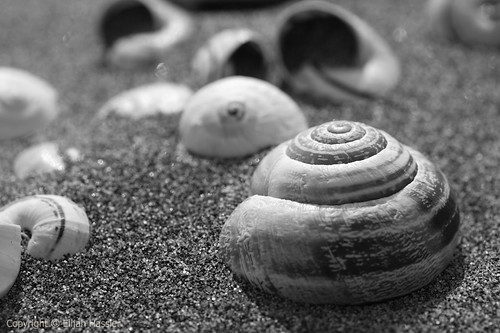 Shells on Petras Beach II