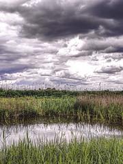 Lakenheath Fen Suffolk