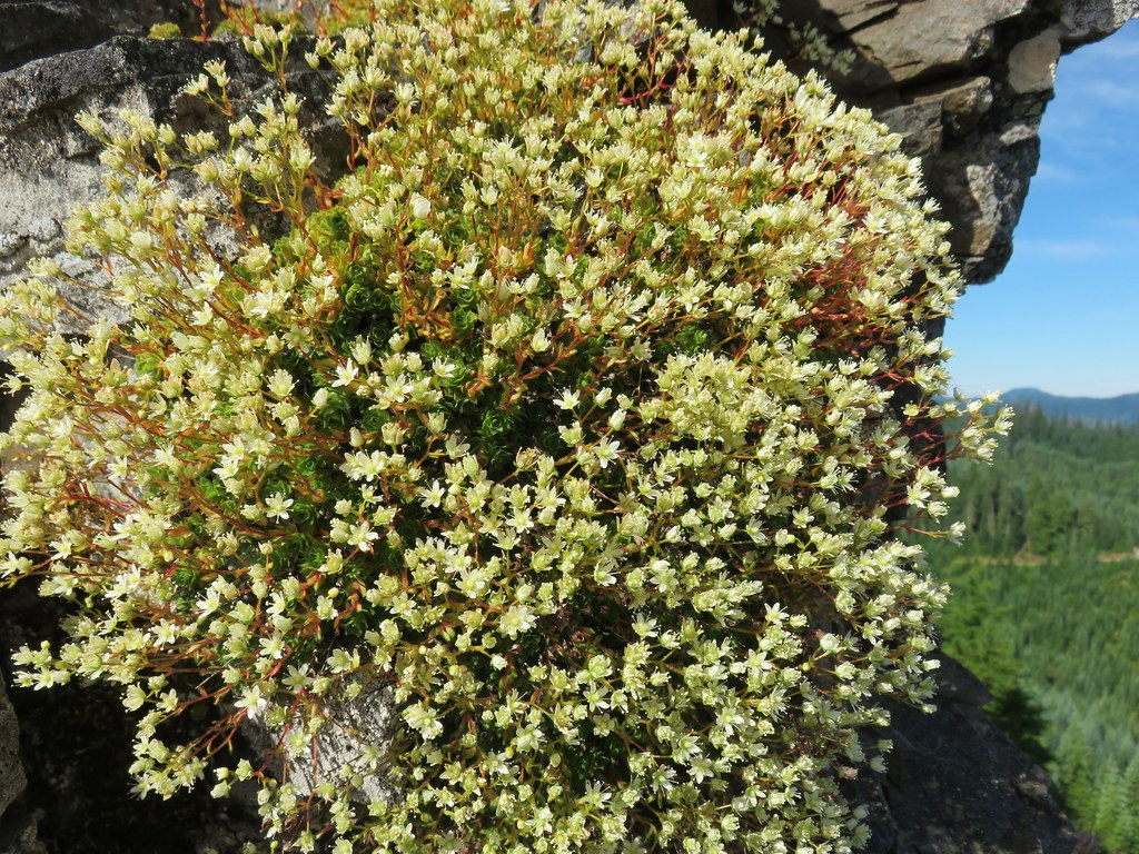 Wildflower on Scar Mountain