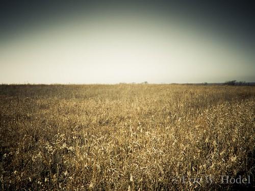 old sky grass texas olympus prairie pure blackland e410 gtowneric ericwhodel parkhillprairie