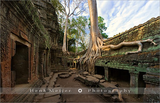 Welcome to Ta Prohm - Cambodia