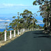 Road up Mt Wellington