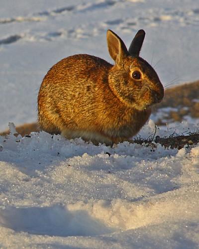 winter friends sun lake snow rabbit ice clouds sunrise michigan