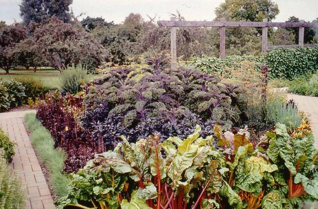 Kitchen gardens ornamental veggie special 2 a for Ornamental kitchen garden design