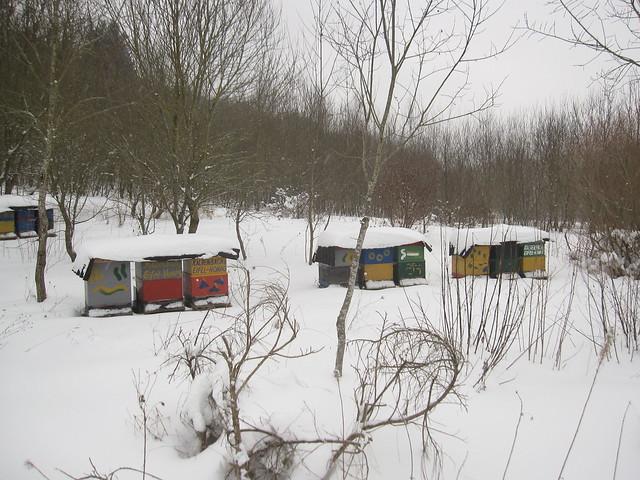 was machen die bienen im winter flickr photo sharing. Black Bedroom Furniture Sets. Home Design Ideas