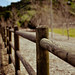Happy Fence Friday ~ Central Park ~ Santa Clarita, CA