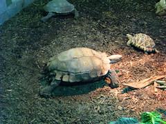 loggerhead(0.0), chelydridae(0.0), sea turtle(0.0), animal(1.0), turtle(1.0), box turtle(1.0), reptile(1.0), fauna(1.0), common snapping turtle(1.0), emydidae(1.0), tortoise(1.0),
