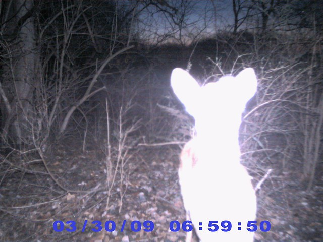 Trail Cam Pics Of Deer http://www.flickr.com/photos/jkgroove/4535377138/