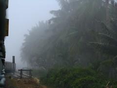 drizzle(0.0), fog(1.0), rain(1.0), haze(1.0), forest(1.0), mist(1.0),