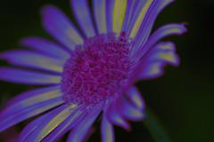 Violet Variations