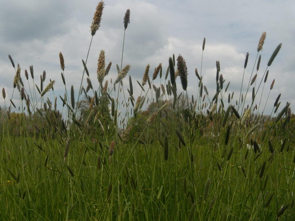 Grass Pluckley Circular
