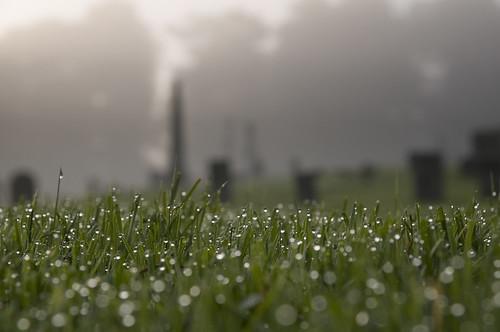 graveyard fog droplets dof bokeh connecticut waterdrops ridgefield fairfieldcounty tamron1750mmf28