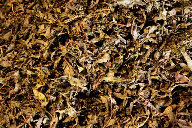 palampur tea factory