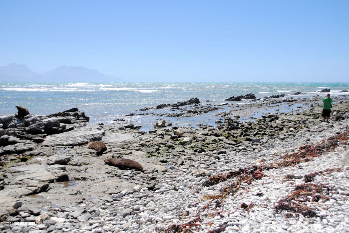 Hemmo ja hylkeitä rannalla, Kaikoura, Uusi-Seelanti