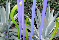 Chihuly Glass, NYBG