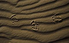 Sandscapes™