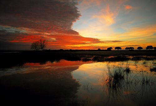 trees winter sunset red sky orange sun lake tree nature water clouds sunrise landscape arbol lago atardecer spain rojo agua nikon reflect cielo nubes d200 naranja reflejos extremadura encinas