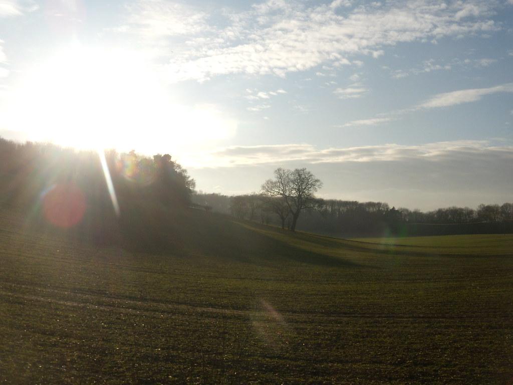 Sun 'n' trees Welwyn Circular