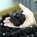giant black truffle