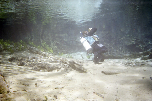 florida diving springs
