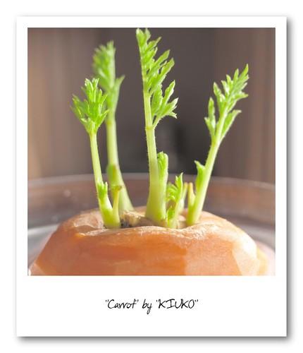Carrot - 無料写真検索fotoq