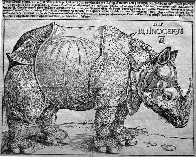 Rhinozeros Albrecht Dürer
