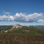 Motovun and vineyards