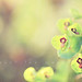 { chartreuse blooms } - explored by annie.manning {paint the moon}