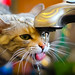Cat Drinking from Sink - Canon T2i by Dave Dugdale