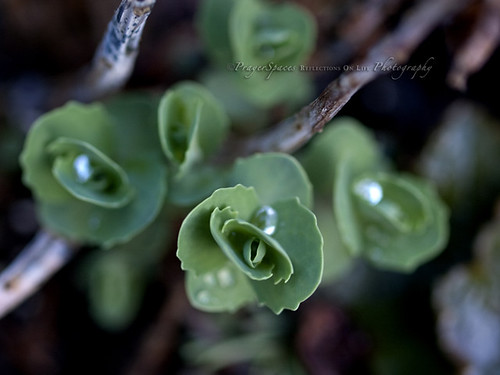 Finding Pearls among the Sedum