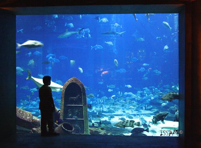 Aquarium ATLANTIS Hotel Dubai  Flickr - Photo Sharing!