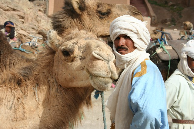 Header of cameleer
