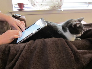 Photo of a seated person using an iPad that's propped up on a cat sitting on the person's lap