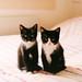 siblings by moggierocket