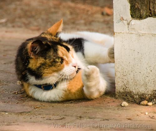 animal cat geotagged virginia feline kitty tortoiseshell williamsburg colonialwilliamsburg vicenç xviiicentury dukeofgloucesterstreet nikond80 feliú seaall tamron18270 sabreur76 vicençfeliú seaall2010 williamdukeofgloucester geo:lat=37271468 geo:lon=76697427