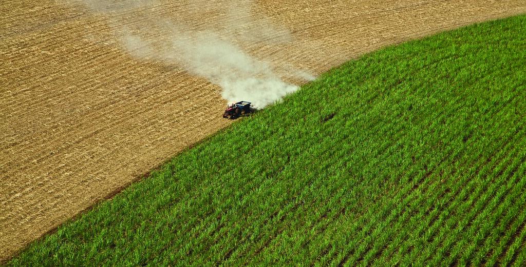 A grande demanda por biocombustíveis incentivará um crescimento na produção de oleaginosas, grãos e açúcar. Foto: Sweeter Alternative (Creative Commons)