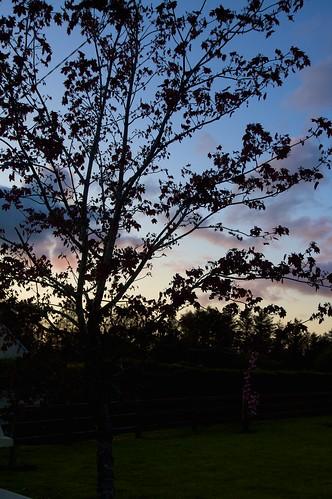 sunset sky tree silhouette clouds evening tint killarney 170550mm