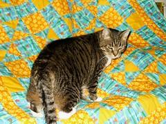 Chata on Sofia's quilt