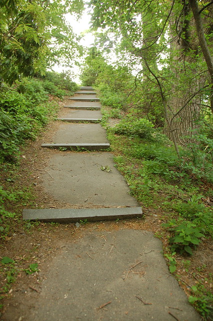 Arnold Arboretum, 18 May 2010: Steps up to Bussey Hill