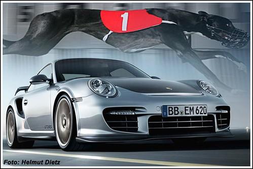 Porsche & Greyhound ...