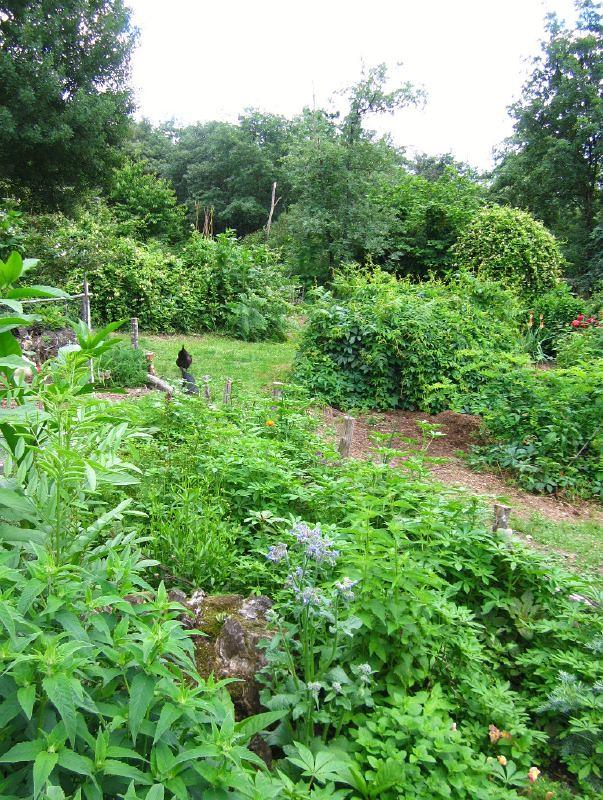 Forum francophone de permaculture consulter le sujet for Creer une butte permaculture
