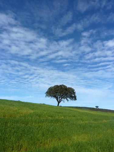 Portugal - Castro Verde Hillside