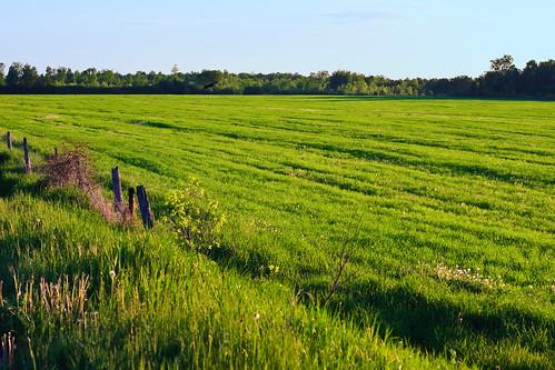 ontario canada rural jasper farm country fields dirtroad merrickville wolford leedsandgrenville eastonscorners weedmarkroad