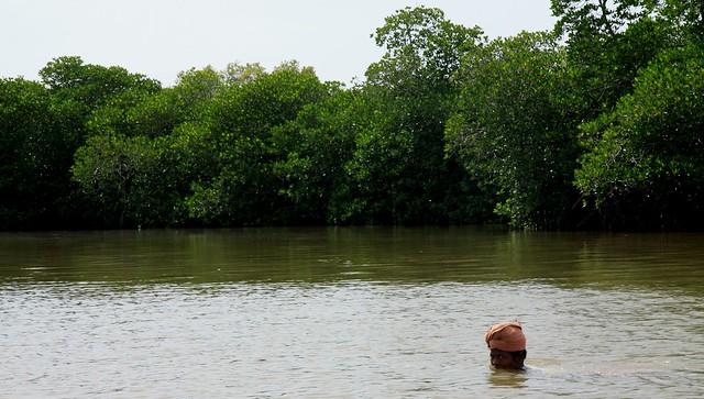 pichavaram mangroves