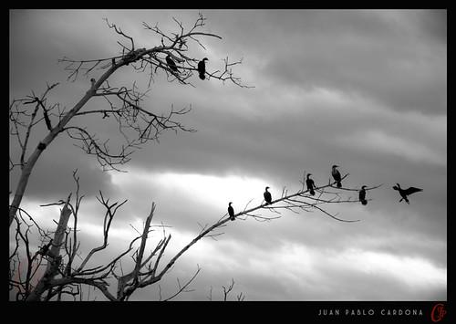 mexico yucatan aves cardona