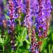 Purple Flowers by LemonsandLimes