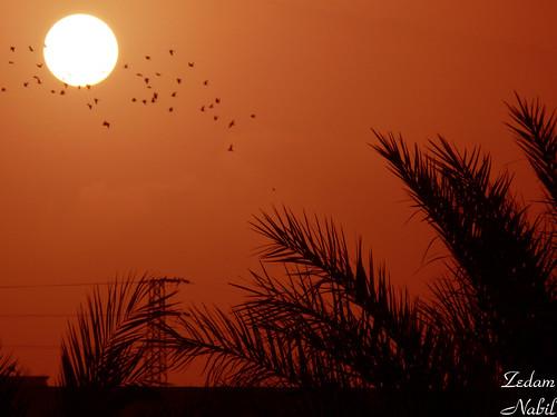 morning sun sunrise lumix algeria soleil day palm panasonic palmtree algerie dust palmier leverdusoleil raselaioun 100commentgroup fz28 platinumbestshot